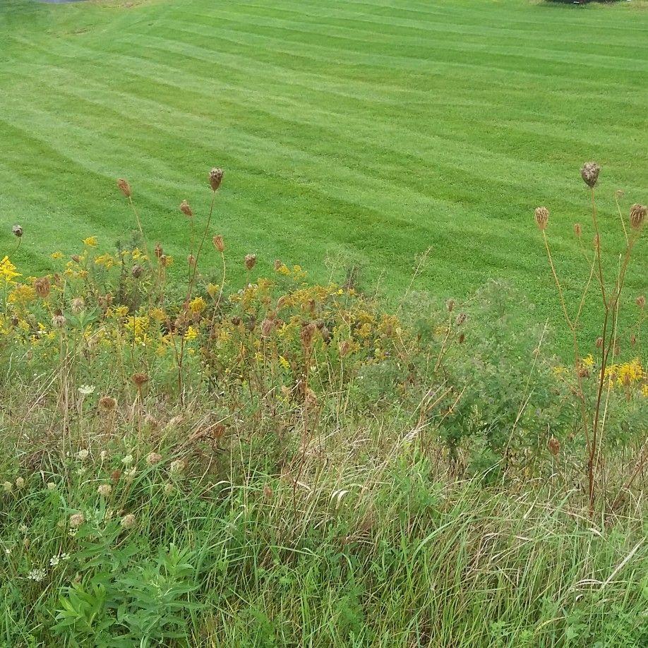 Echoside Landscaping, Snow Removal & Repair