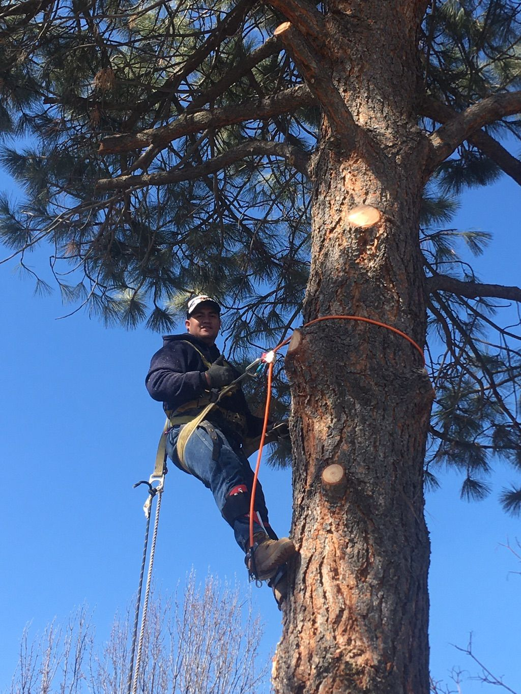 Miti Tree Services