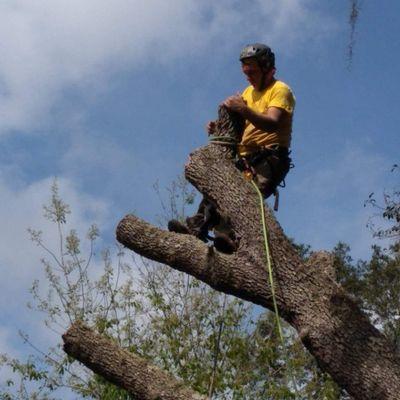 Avatar for Nick's Tree Service New Port Richey, FL Thumbtack