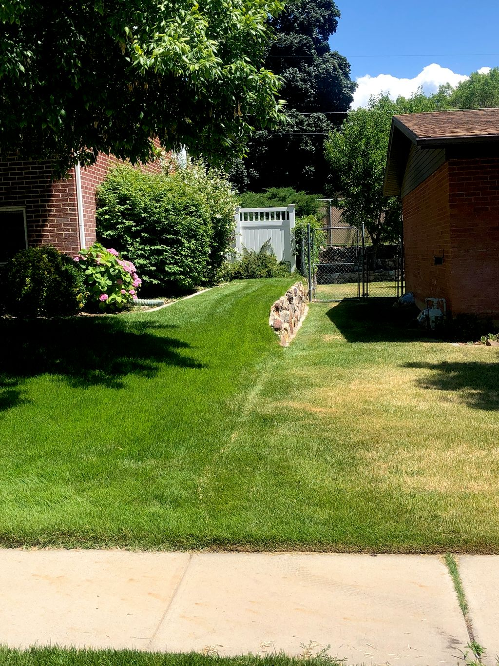 Difference between our clients lawn and the neighbors