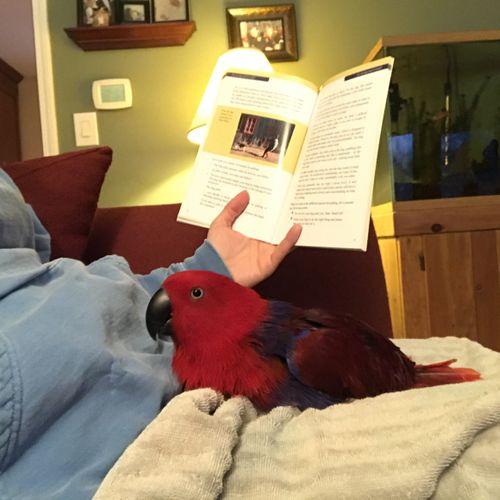 Birdie Story Time!