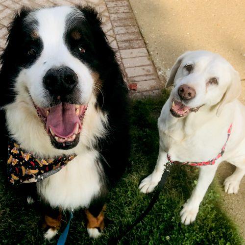 "Samson & Tara, my own ""pups""!"