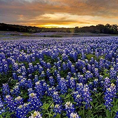 Avatar for Blue Bonnet Notary Spring, TX Thumbtack