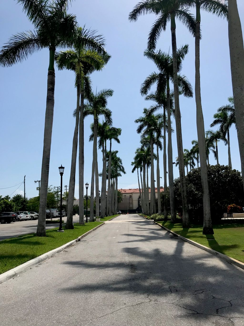 Museum entrance Multiple Tall Royal Palms at entrance