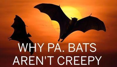 Avatar for The Bats Super Junk Removal Denver, CO Thumbtack