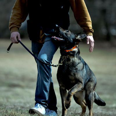 Avatar for Sentry K9 Services LLC Wilbraham, MA Thumbtack