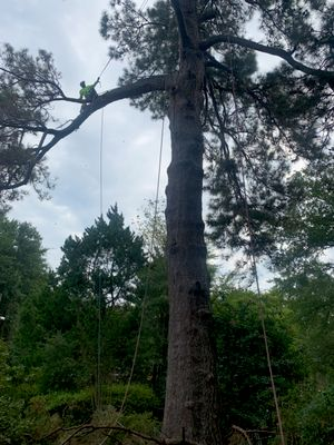 Avatar for Lex's best for less tree service llc
