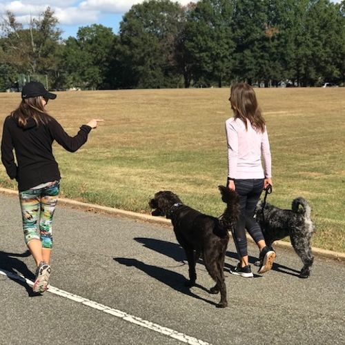 Enjoying the empowering moment of a client walking both dogs together without issue for the first time.