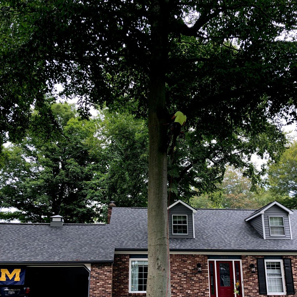 Lee's tree care and landscaping