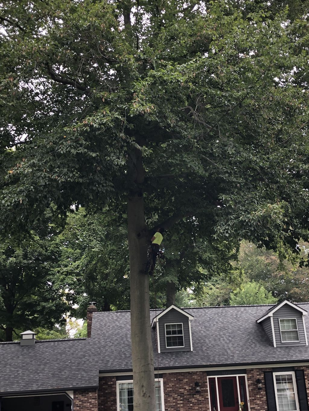 Tree service landscaping business