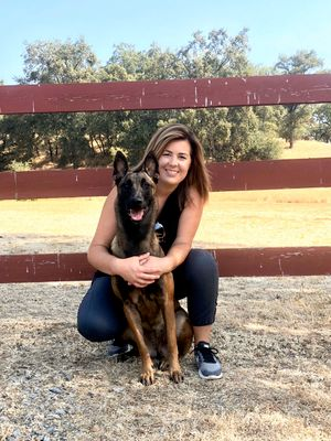 Avatar for K9 Ambassadors Dog Training Georgetown, TX Thumbtack