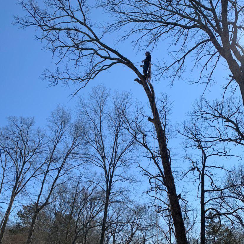 B's Tree Service