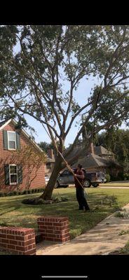 Avatar for Gutiérrez tree service y lawn services Conroe, TX Thumbtack
