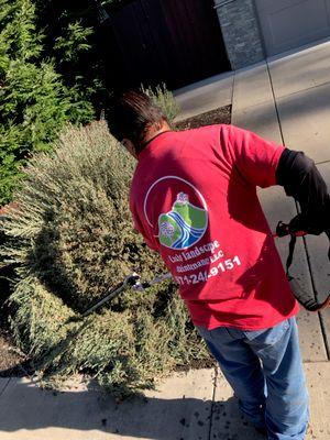 Avatar for Luis landscape maintenance LLC Mcminnville, OR Thumbtack