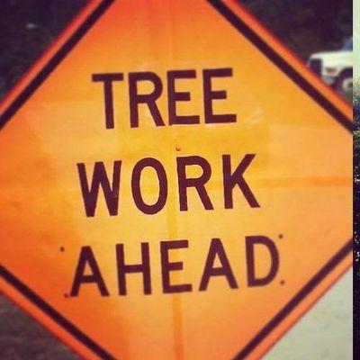 Avatar for Ready Tree Service