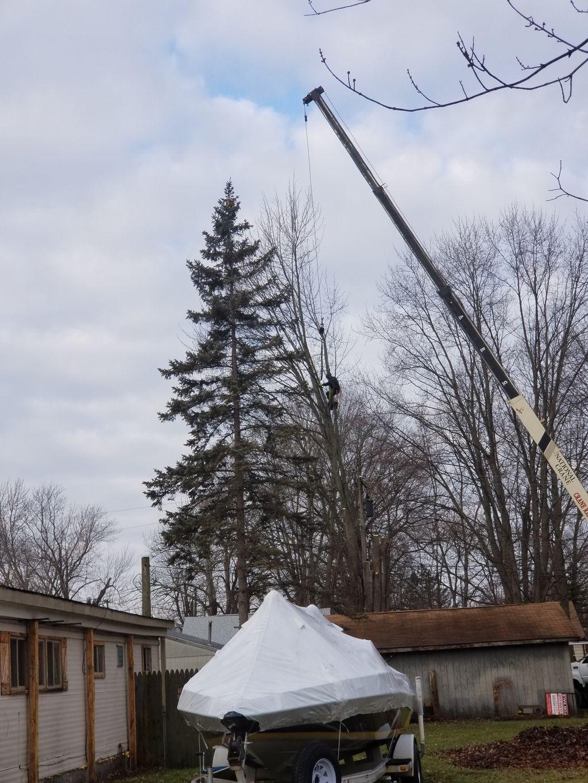 silver maple removal using a crane