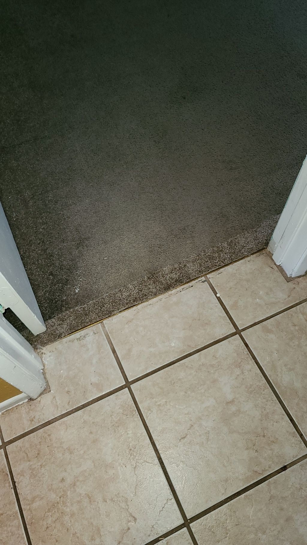 Cat Damage Carpets