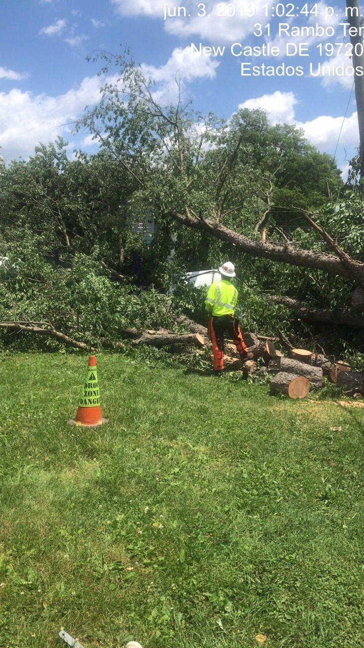 Esteban tree services LLC