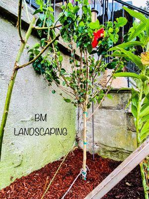 Avatar for BM Landscaping Services Glen Burnie, MD Thumbtack