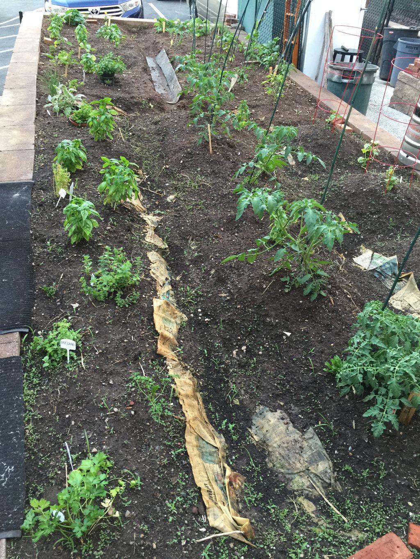 organic restaurant garden