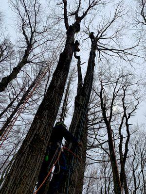 Avatar for GBE Guifarro tree services Waterbury, CT Thumbtack