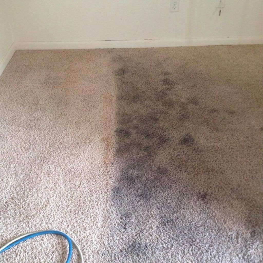 ABS CARPET CLEANING and FLOOR CARE