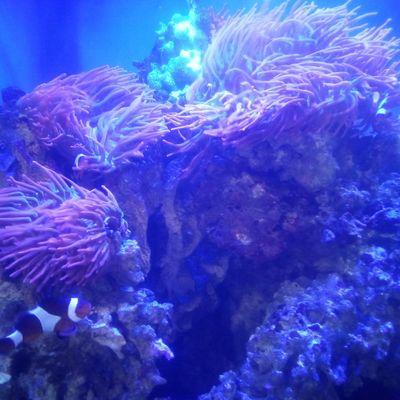 Avatar for Sea Deep Aquatics