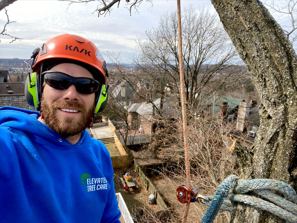 Elevated Tree Care and Landscape