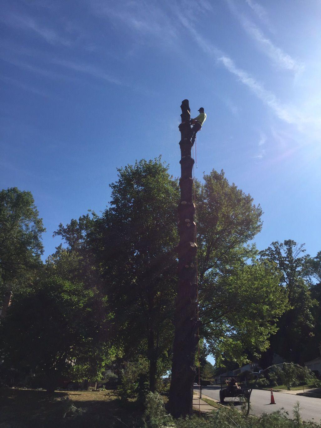 Nain Tree service & home improvement