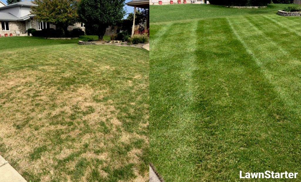 The Grass is Always Greener for Katie