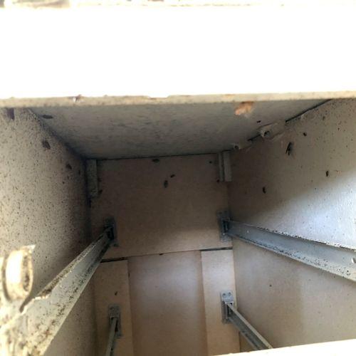 German roaches under kitchen cabinets
