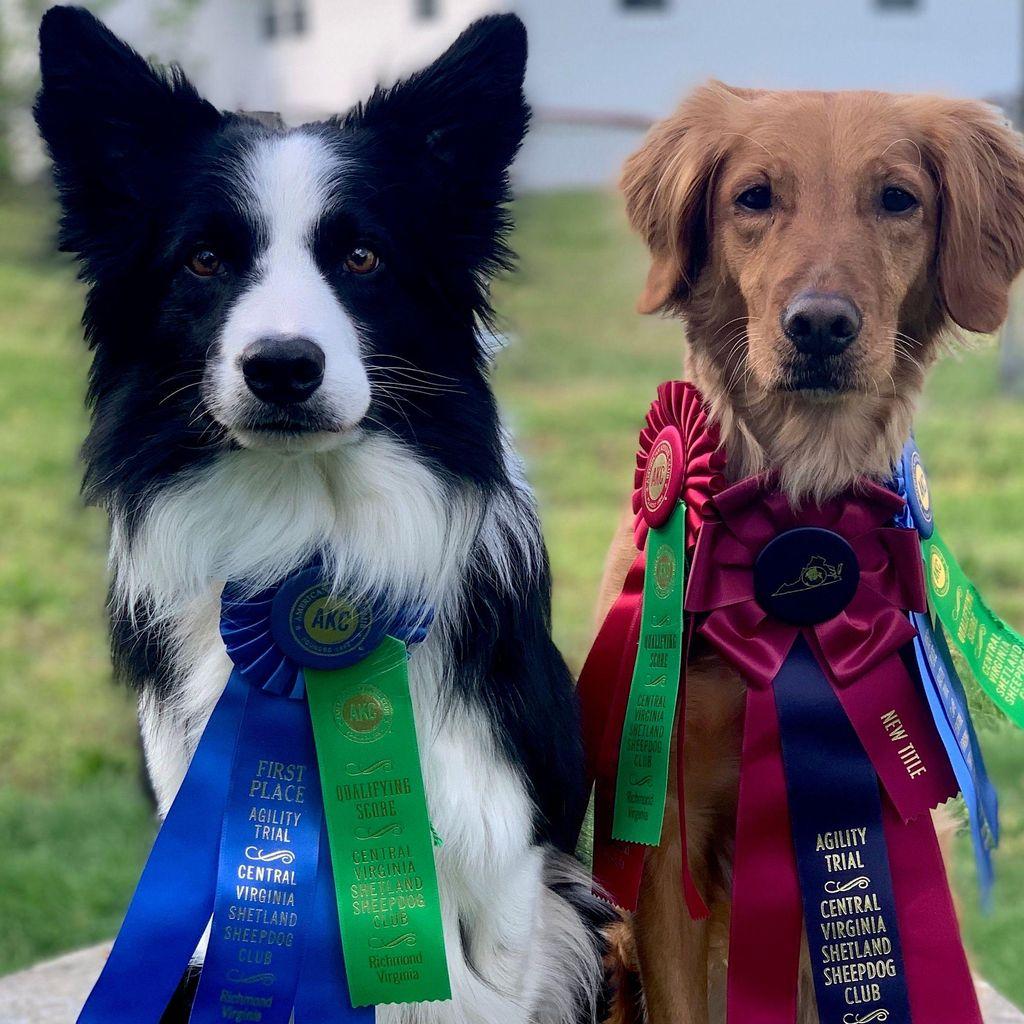 GameTime Dog Training LLC