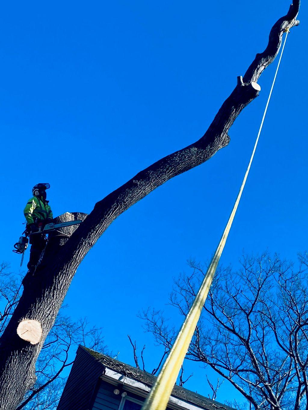 Pro crew  tree service & masonry