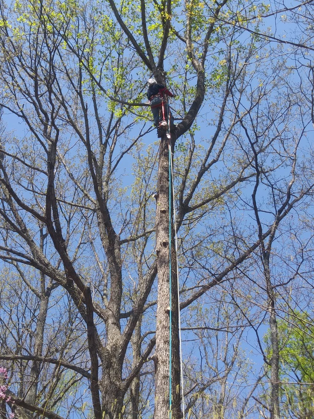 Tree solutions service