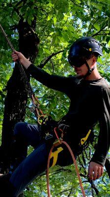 Avatar for Tree assault tree care