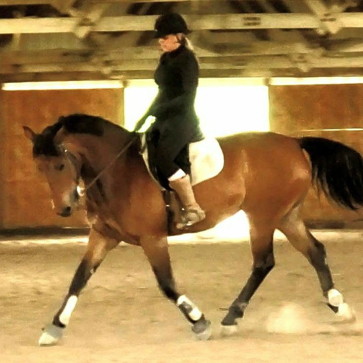 Academy of Equestrian Games
