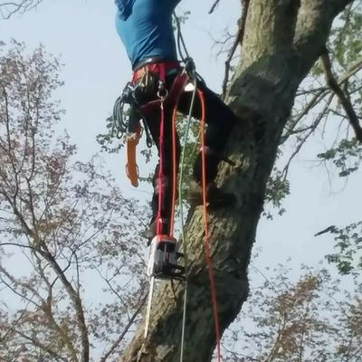 Avatar for Cousins Tree Service