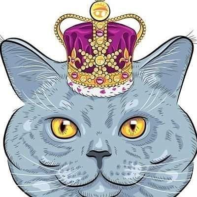 Avatar for Kitty Kingdom