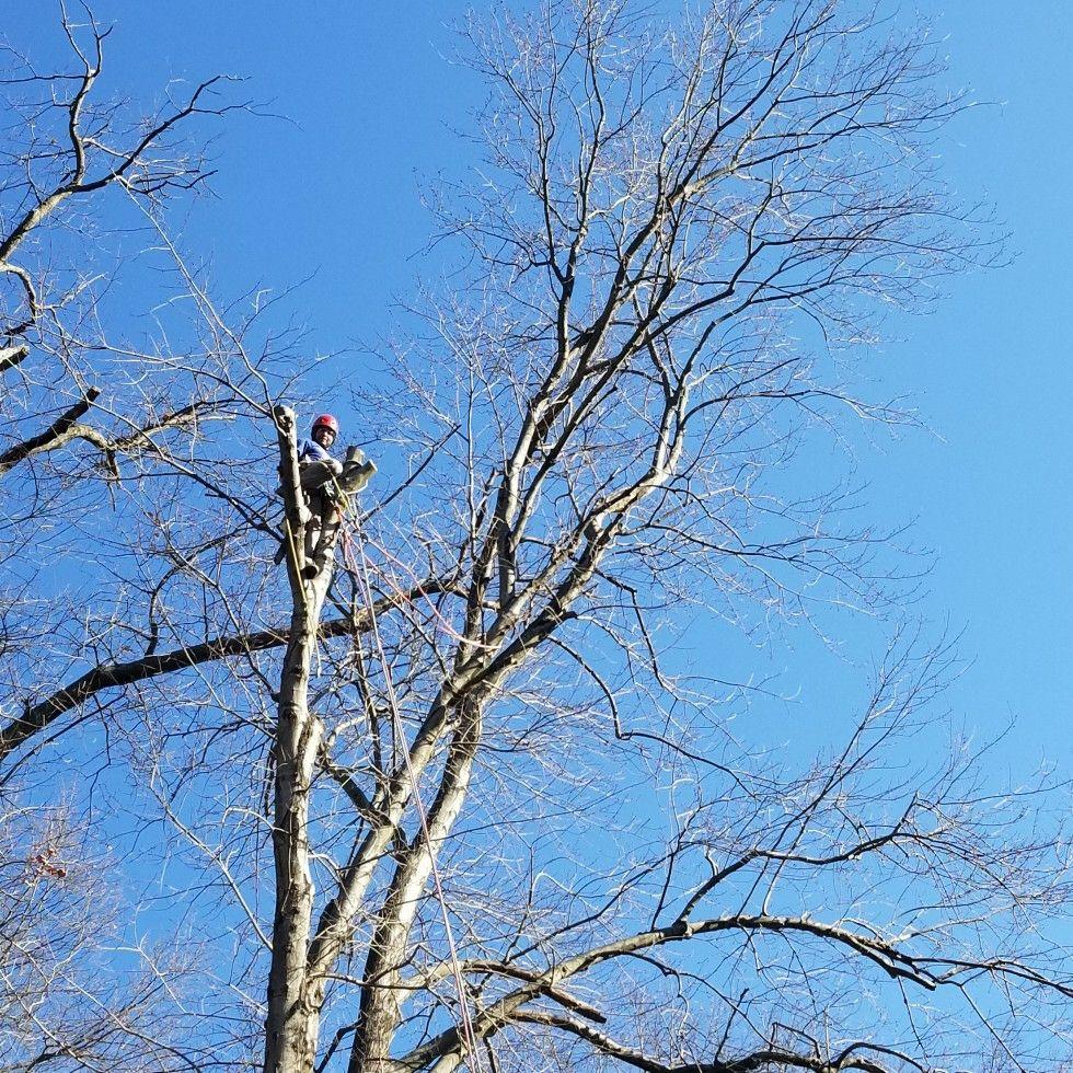 YA Tree Service Inc