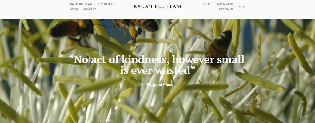 Web Design For Nonprofit
