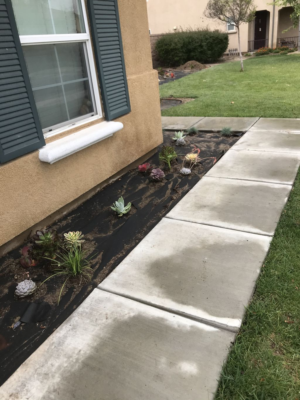 Drought tolerant front yard with lots of curb appeal