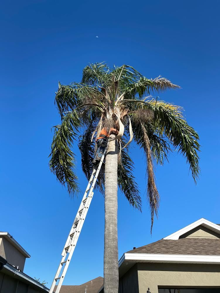 Palm Tree Trimming