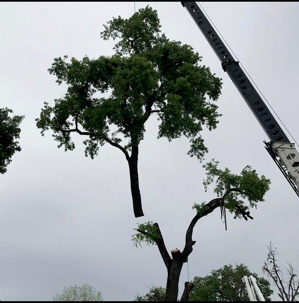 Oak Crane Removal