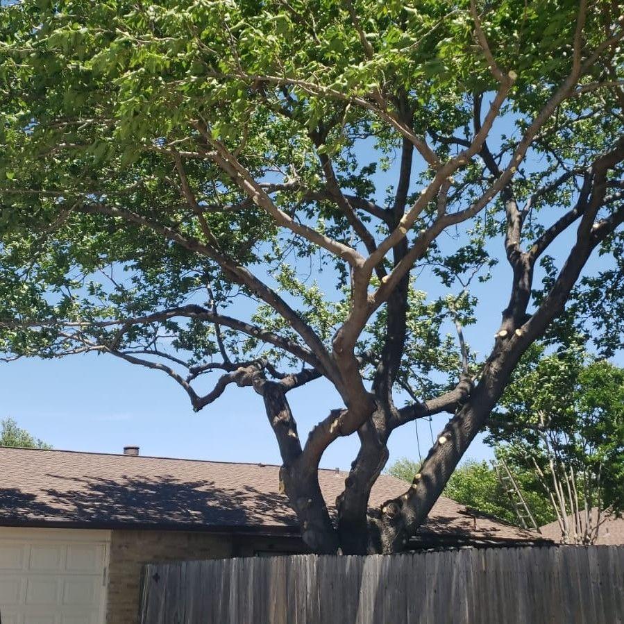 J&J Ramirez Tree Trimmers LLC