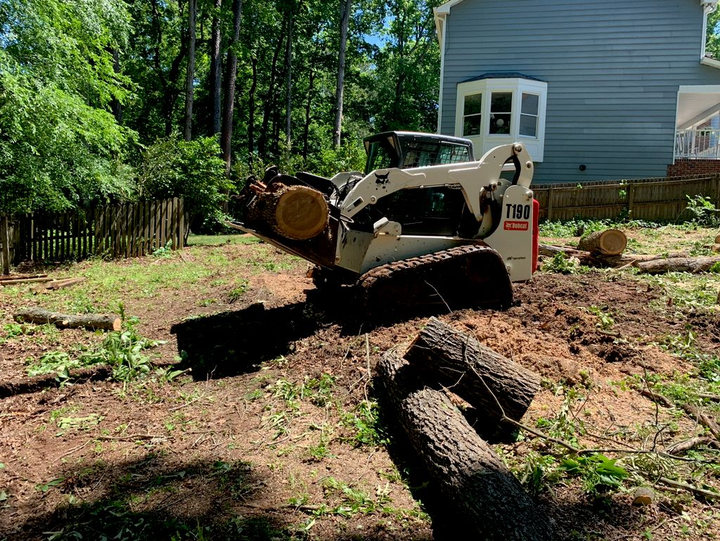Tree Trimming and Removal - Cary 2020