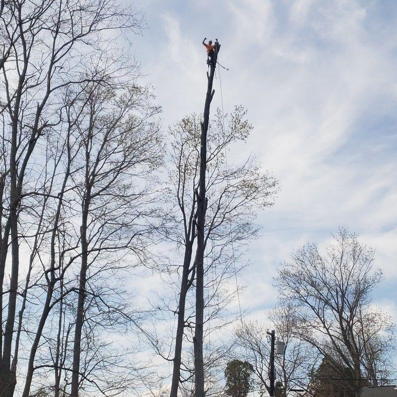 RG Tree Services LLC