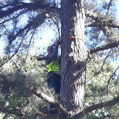 Avatar for V&M tree Services