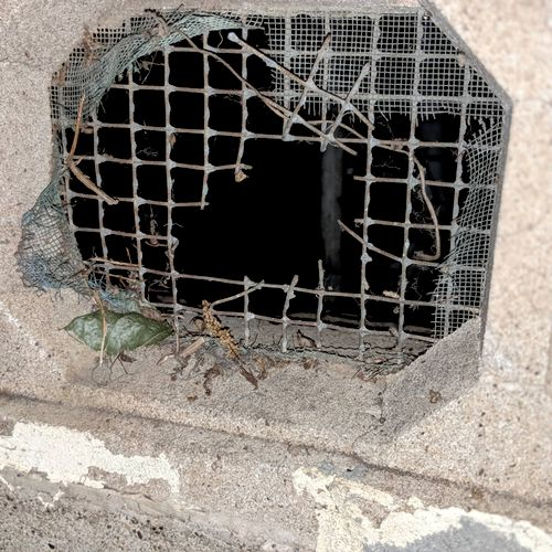rodent entry that needs to be sealed up.