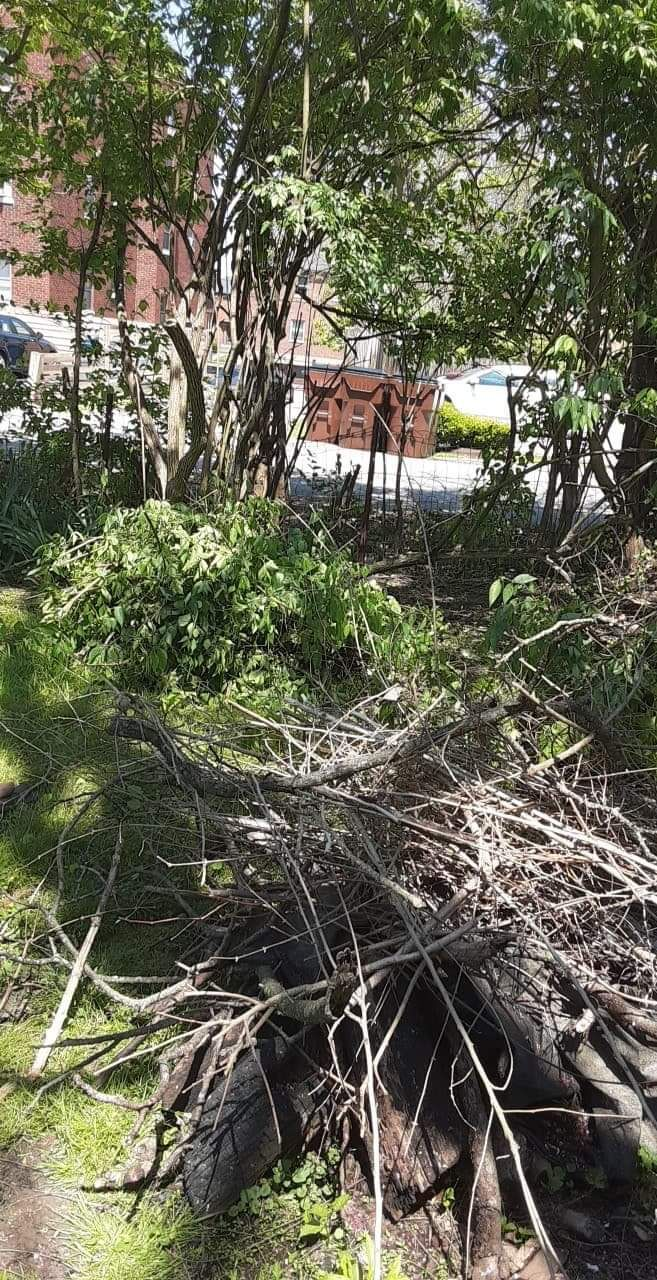 Garden clean up and fence installation