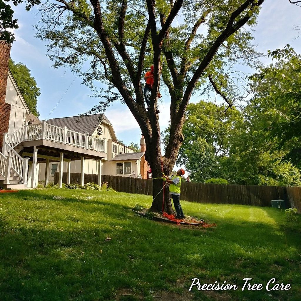 Precision Tree Care & Property Maintenance LLC